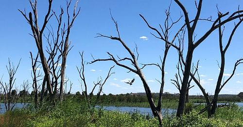 Plan Of Management Adopted For Campbells Wetland
