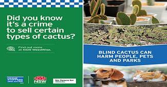 Cactus Causing Prickly Problem